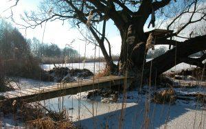 Winterlandschaft im Biosphärenreservat Schorfheide ChorinBrodowin